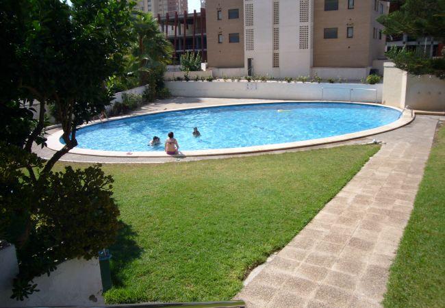 Apartamento en Benidorm - LA PINTA (1 DORMITORIO)-1-dormitorios