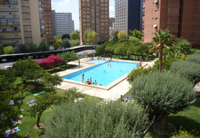 Apartamento en Benidorm - PRINCIPADO EUROPA (2 DORMITORIOS)-2-Dormitorios